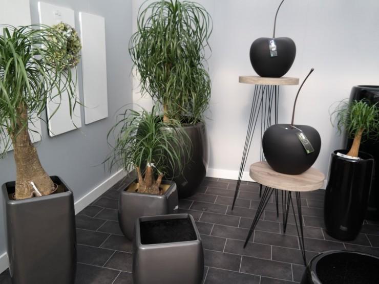 pflanzen gef e deko miru. Black Bedroom Furniture Sets. Home Design Ideas